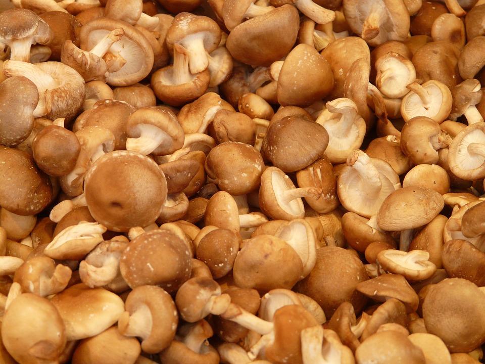 Shiitake mushroom super gezond